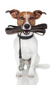 images-hond-met-lijn