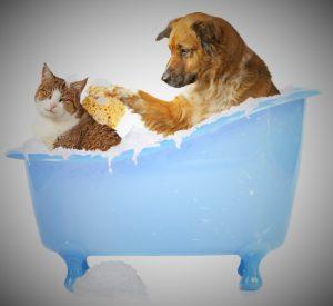 hond kat bad (2)